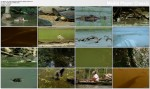 Dzika Ameryka Po³udniowa / Wild South America (2006) PL.TVRip.XviD / Lektor PL